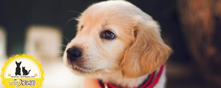 狗狗身上痒是怎么回事 狗狗可能患上了皮肤病