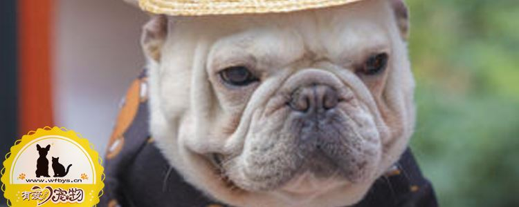 狗反肠是什么 狗反肠的症状是什么