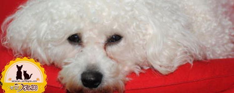 狗狗寄生虫有哪些 狗狗感染寄生虫你知道原因吗