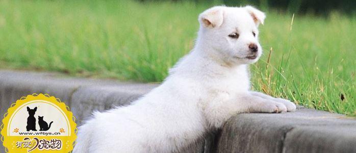 狗骨折怎么恢复的快 狗狗骨折吃什么好