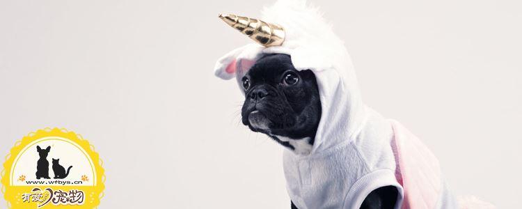 狗狗感冒没精神怎么办 合格铲屎官养成需知