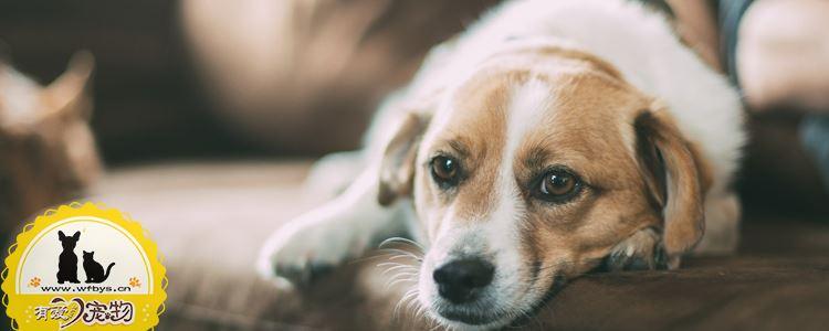 狗狗生病的症状 及时发现征兆把握最佳治疗时期