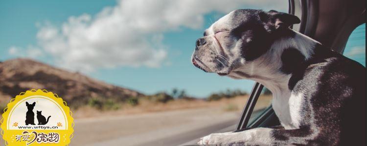 狗狗中暑会吐吗 狗狗中暑的症状有哪些