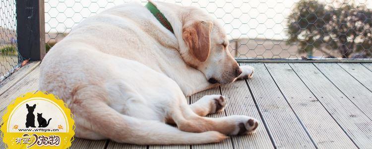 狗狗中暑怎么办 这个几个办法你一定要知道