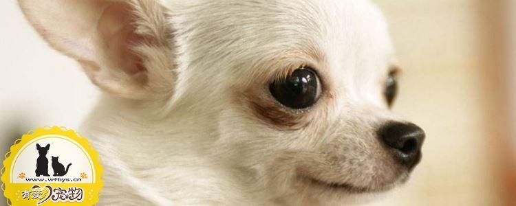 狗流鼻涕怎么办 狗流鼻涕吃什么药