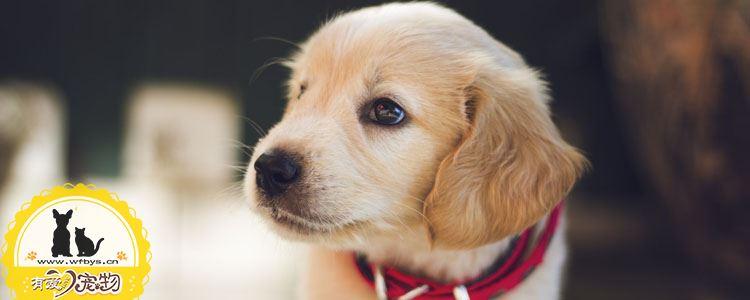 狗狗耳朵发炎怎么办 科学治疗护理手册