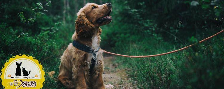 狗狗耳朵掉毛什么原因 狗狗耳朵掉毛是生病了吗