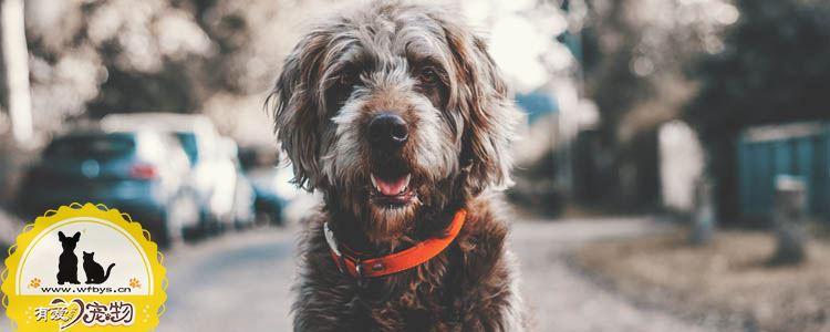 狗狗尿道口有黄脓 狗狗尿道炎严重会导致死亡