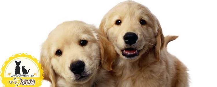 狗狗喜欢扑人怎么办 该如何训练