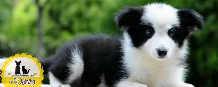 怎么训练狗狗不咬人 主人的做法很关键