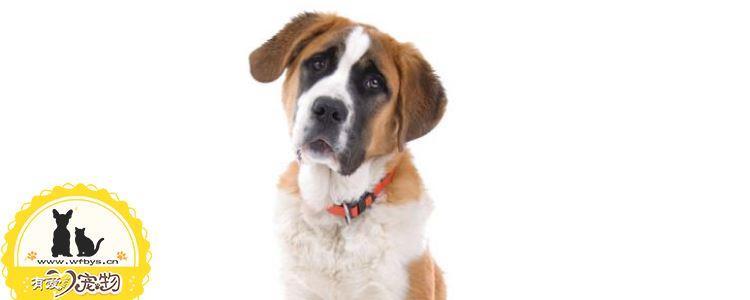 狗狗疫苗几联是什么意思 狗狗需要接种哪些疫苗