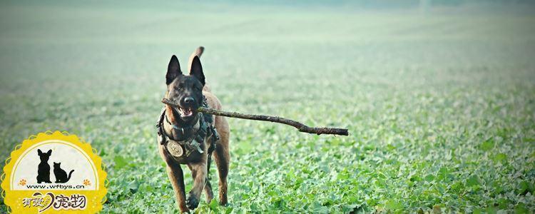 怎么训练狗不追人 别等狗狗闯祸才知道