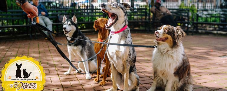 怎么和狗狗玩耍 你真的知道和狗狗互动吗