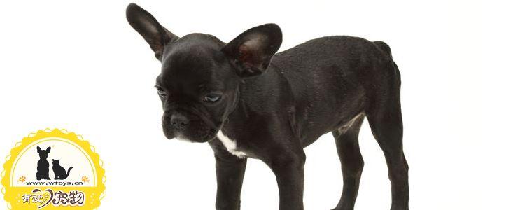 狗狗是先驱虫还是先打疫苗 你知道吗