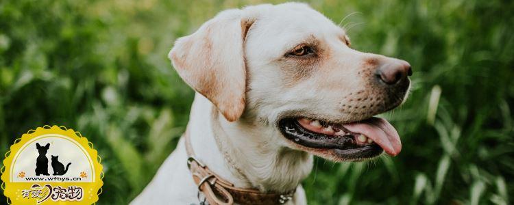 狗狗得皮肤病是因为什么 这几个原因你知道吗