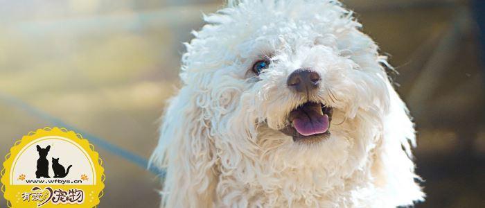 狗狗得皮肤病要剃毛么 盲目剃毛有伤害!