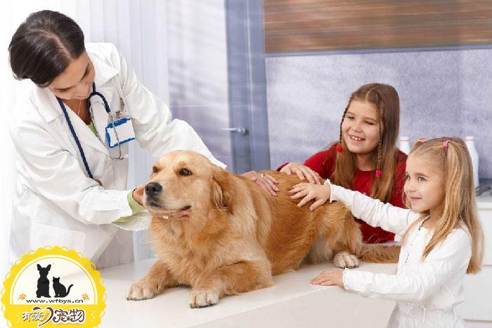 狗狗感冒了怎么办 早发现早诊断早治疗