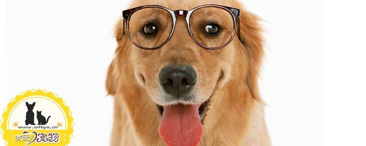 狗狗吐怎么办吃什么药 狗狗呕吐频繁是为什么