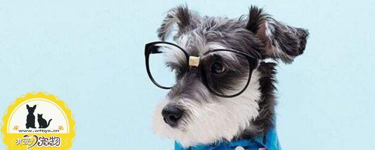 犬胰腺炎特效药 犬胰腺病预防