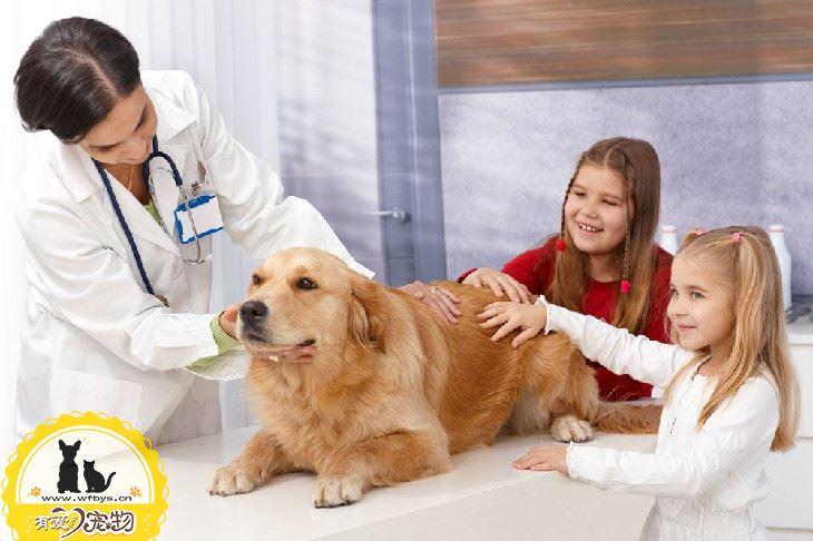 狗狗咳嗽怎么办 可能是向你发出的求救信号