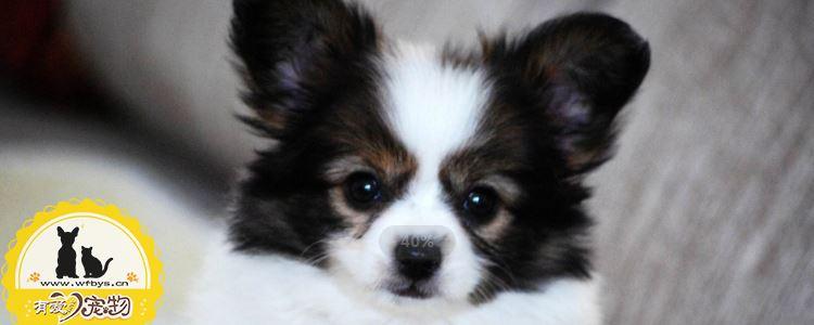 狗狗感冒症状 狗狗感冒表现有哪些