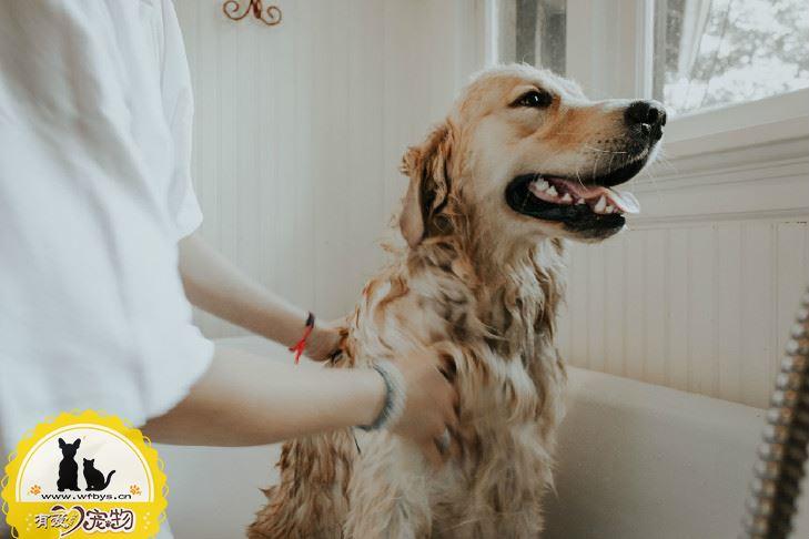 狗的肛门腺在什么位置