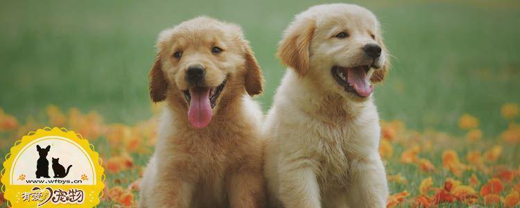 各种狗狗的分类 世界犬业联盟将所有品种分为十类