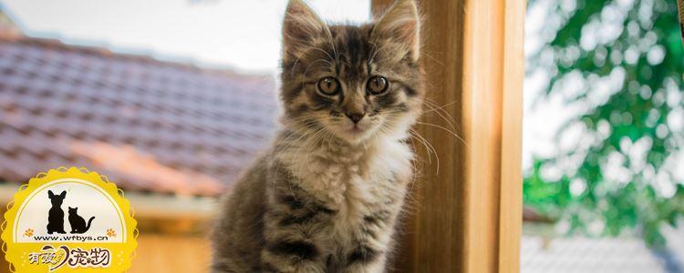 猫眼睛疾病有哪些 猫咪眼睛护理不可忽视