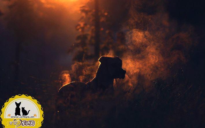 巴黎圣母院大火 火灾中宠物急救指南