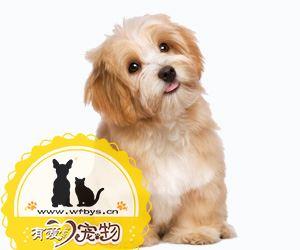 狗狗细小是什么症状 狗狗细小症状有哪些