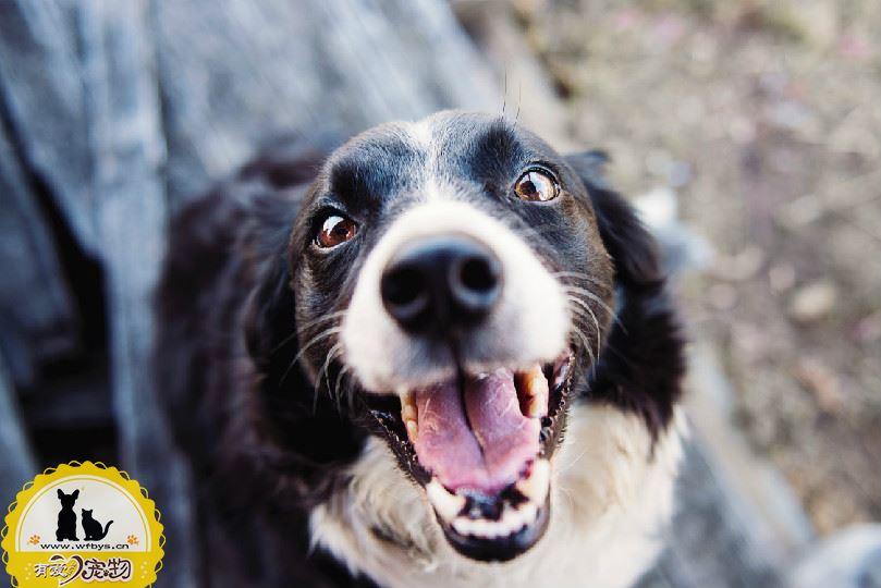 狗狗呕吐不吃东西怎么办 做好以下几点有效解决