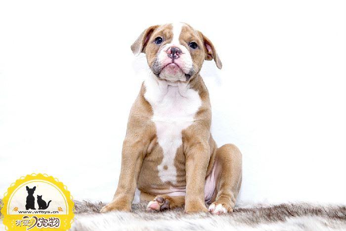 狗狗感冒能打疫苗吗 别踩这些疫苗雷区