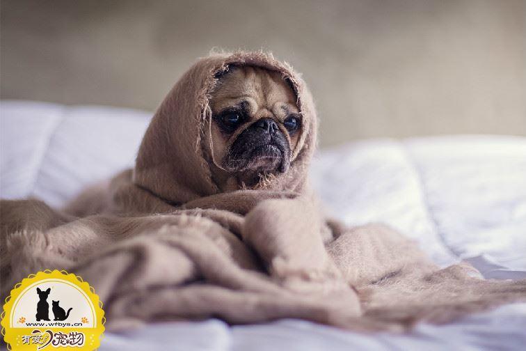 狗狗感冒症状有哪些 狗狗感冒会有哪些表现