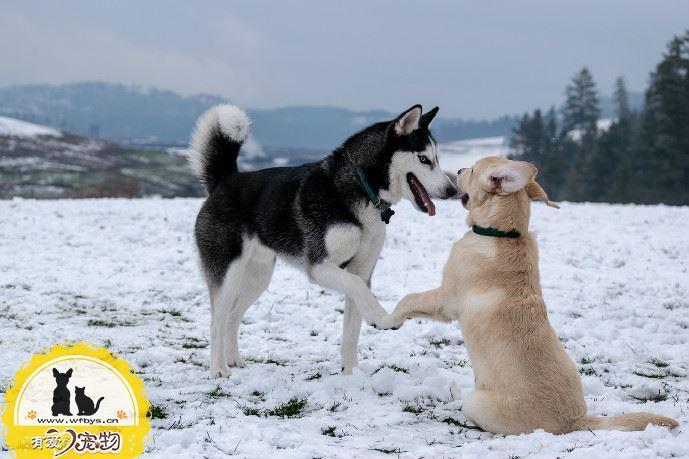 狗狗呕吐白色泡沫 小心是疾病前兆