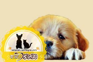 狗吃完提子的中毒症状