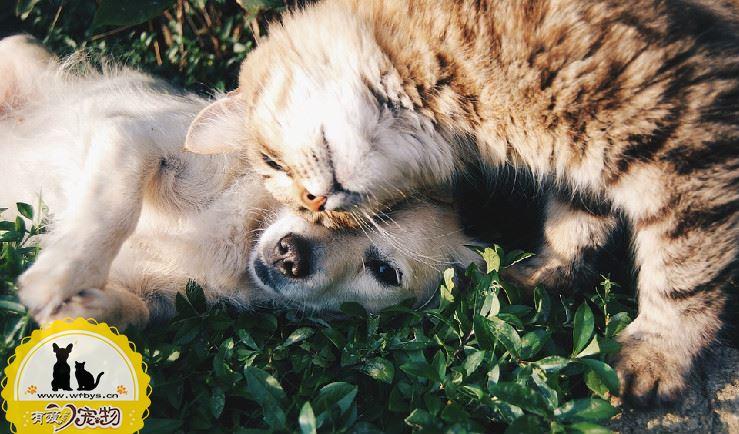 狗狗呕吐怎么治疗用药 狗狗症状诊断及对策