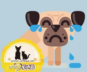 狗肚子有虫什么症状