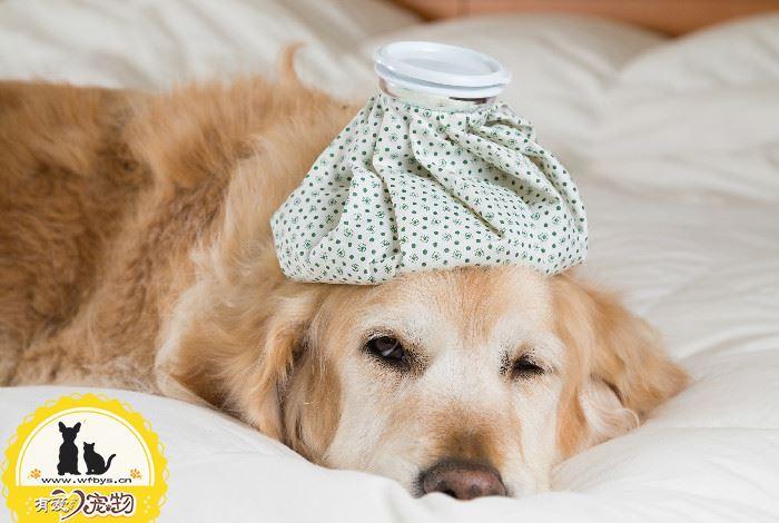 狗狗如何预防感冒 有效对抗流感多发季节