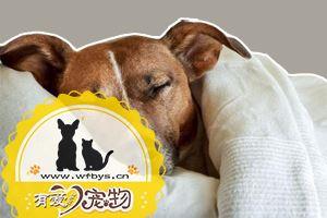 狗感冒发烧怎么治疗 狗感冒发烧治疗方法