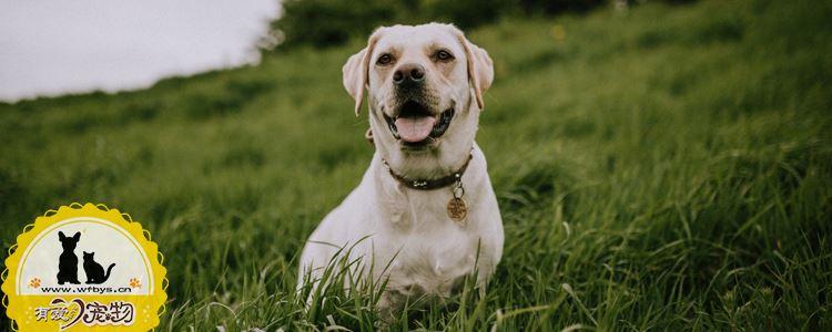 狗狗牙龈出血怎么回事 快看看你家狗狗牙龈健康吗