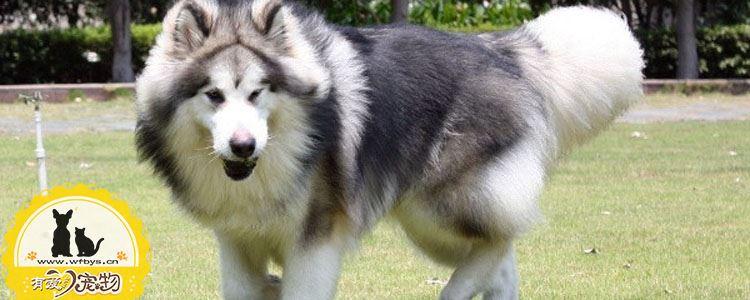 狗狗膀胱结石的原因 狗膀胱结石原因分析