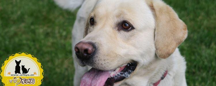 狗狗常见的口腔疾病有哪些 口腔卫生很重要!