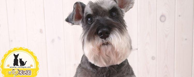 狗狗耳螨预防和治疗 狗狗耳螨问题不可小觑!