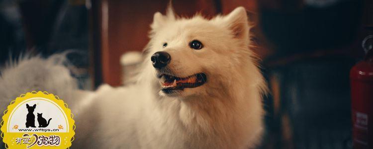 狗狗黄疸症状是什么 警惕突然变黄的牙齿