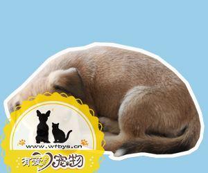 犬钩虫病的症状有哪些