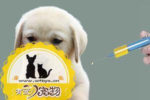 拉布拉多幼犬打疫苗表