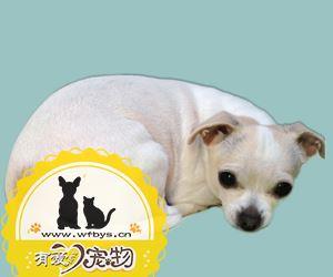 狗狗皮肤病症状