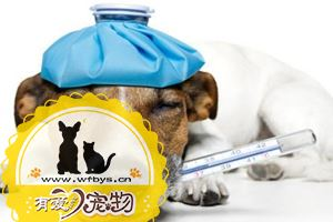 怎么给狗狗量体温
