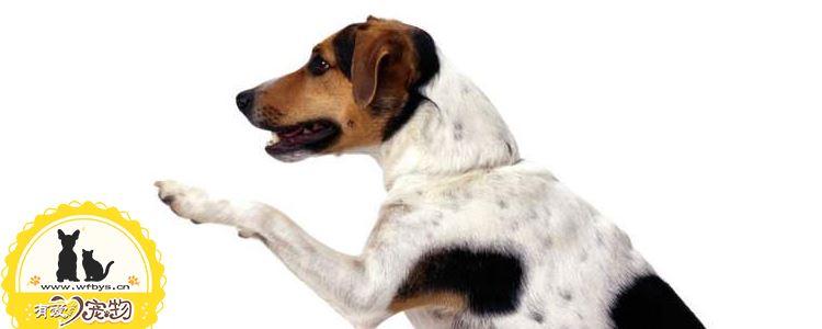 狗狗吃骨头好吗 如何避免狗狗吃骨头划伤肠胃
