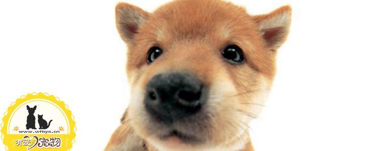 狗狗洗澡注意事项及方法 狗狗什么情况不能洗澡
